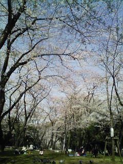 千葉公園_遠景2