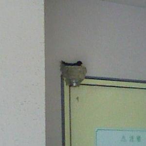 ガレージ燕抱卵2