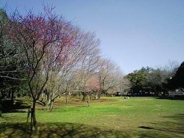 千葉公園全景
