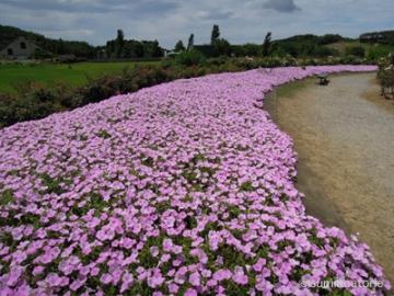 ドイツ村花畑