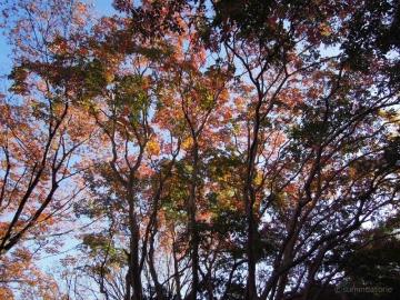 千葉公園紅葉1