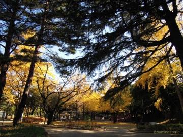 千葉公園紅葉2