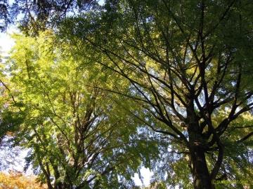 千葉公園紅葉3