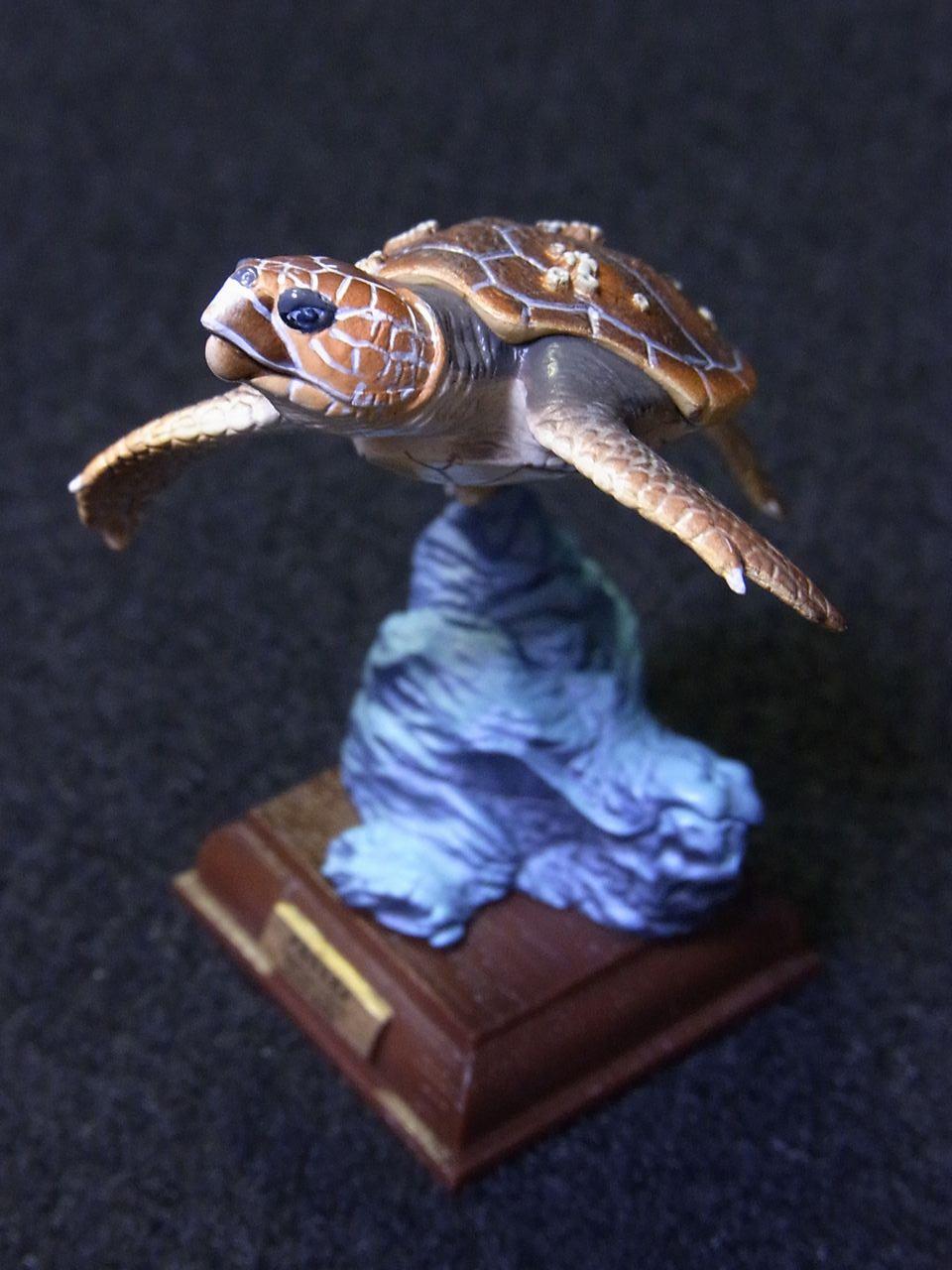 ネイチャーテクニカラー,アカウミガメ
