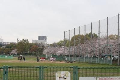 桜とグランド