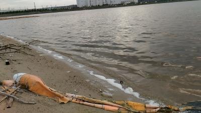 堺浜自然ふれあいビーチ砂浜