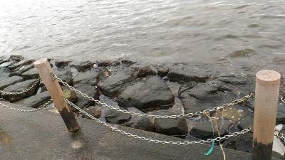 堺浜自然ふれあいビーチ岩場