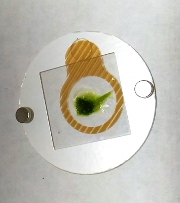 西瓜の皮の一部