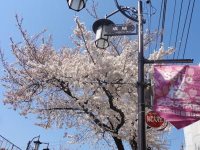 成城桜フェステバル