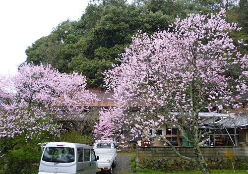 桃の咲いた頃