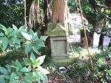 榧(カヤ)の樹の根元の石祠