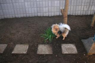広くなった庭で