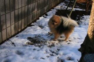 雪とチョコ1