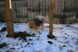 雪とチョコ2