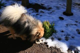 動物の好きな草