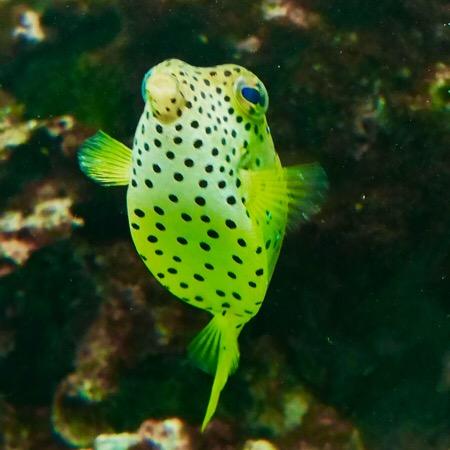 葛西臨海公園 葛西臨海水族園 水族館 熱帯魚 フグ