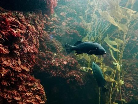 葛西臨海公園 葛西臨海水族園 水族館 熱帯魚