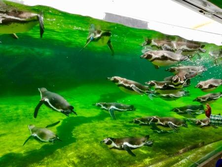 葛西臨海公園 葛西臨海水族園 水族館 熱帯魚 ペンギン