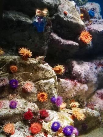 葛西臨海公園 葛西臨海水族園 水族館 熱帯魚 イソギンチャク