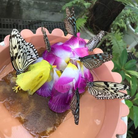 蝶 足立生物園 温室 インスタ映え