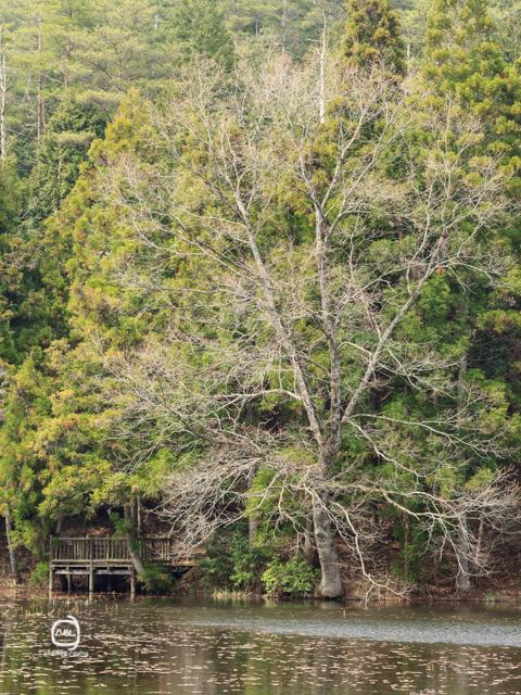 nalblog.com nalブログ。写真と旅と言葉たち 島根県飯南町赤名湿原4月の風景 まだまだこれから  ここから  ここから  雪は解け つぼみは膨らみ 桜咲く  芽吹く緑 色増す里山  足元の緑・白・黄色   まだまだこれから  ここから  ここから 島根県飯石郡にある飯南町は2005年、頓原町と赤来町が合併してできた町です。その旧赤来町の下赤名という場所に赤名湿原はあります。この湿原は環境省が選定した「日本の重要湿地500」にも選ばれているそうです。(環境省ホームページ)規模はそれほど大きくはありませんが、ここには寒冷地や湿地の様々な植物や生物が生息しています。4月にはミツガシワという花が、6月中旬から7月上旬にかけては「幻のトンボ」といわれるハッチョウトンボが見られるそうです。(島根県ホームページ)  赤名湿原までは、車出は広島市街地から高速で2時間弱、県道が早い場合もありますが、渋滞を考えると高速が便利です。交通機関を使う場合は、いったん三次駅まで行って、そこからバスで向かうことになります。余談ですが、ルート検索はGoogleマップの音声検索が結構使えます。検索画面横のマイクの絵をタップすると「お話しください」という文字と共にマイク画面が出てくるので、「〇〇駅から三次駅」や「赤名湿原の行き方」または目的地の住所を言ってください。そうすると、指定した駅や現在地から目的地までの行き方をカンタンに見つけることができます。  この2枚の写真は2013年4月中旬に撮影しました。この辺りは雪の深い地域でようやく桜が満開の頃でした。湿原の木々の葉っぱは開いておらずで、常緑樹だげが緑をしている風景でした。あと何週間もすればこの枝に緑の葉がついていくのかと想像するととてもワクワクするのでした。厳しい冬も終わり、まだ葉の芽吹いていない木々のもう「準備万端」という様に枝の隅々まで生命力であふれているといった感じを受けました。また訪れたい場所の一つです。7月の新緑の風景は、「島根飯南町赤名湿原 7月の風景」をご覧ください。「4月の長尾池」  写真:©2013 Yuko Yamada. All Rights Reserved. 撮影地:島根県飯石郡飯南町下赤名 赤名湿原(赤名湿地性植物群落) 使用カメラ:デジタル一眼レフカメラ Canon EOS Kiss X4 使用レンズ:EF 50mm f/1.8 II 焦点距離:50mm 露出設定:1/80秒 f/8.0 ISO 100 三脚使用:マンフロット三脚 参考資料 環境省ホームページ:生物多様性の観点から重要度の高い湿地 島根県ホームページ:赤名(あかな)湿地の湿地性植物(飯南町) 島根ジオサイト:赤名湿原(あかなしつげん) Wikipedia:赤来町、頓原町 当ブログに掲載されている画像等の無断転載はご遠慮ください。