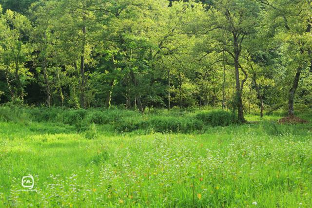 nalblog.com nalブログ。写真と旅と言葉たち  島根県飯南町赤名湿原 7月の風景 みどり  しろ  きいろ  林の中  水の世界 島根県飯石郡にある飯南(いいなん)町は2005年、頓原町と赤来町が合併してできた町です。その旧赤来町の下赤名というところに赤名湿原はあります。この湿原は環境省が選定した「日本の重要湿地500」にも選ばれているそうです。(環境省ホームページ)規模はそれほど大きくはありませんが、ここには寒冷地や湿地帯特有の様々な植物や生物が生息しています。4月にはミツガシワという花が、6月中旬から7月上旬にかけては「幻のトンボ」といわれるハッチョウトンボが見られるそうです。(島根県ホームページ)  初めてこの赤名湿原に来たのは2013年4月14日のことでした。それから3ヶ月後、湿地性植物が見頃になったというので再び訪れることにしました。初夏の日差しも湿地の森に入ると和らいで空気もひんやりとしたのを感じました。4月の力強くも殺風景な長尾池とは対照的にの水面には様々な植物が顔を出していて、葉っぱのなかったあの大きな木にはモッサリと葉っぱが茂り、池のほとりのウッドデッキが隠れる程でした。特に印象的だったのは、柔らかい緑色をしたハンノキ林とその周辺の草花の色です。遊歩道を歩いてしばらくは太陽が隠れていて気付きませんでしたが、日が照ったとたんに太陽の光をすーぅっと吸い込んだように柔らかく輝いてコチラの目を惹き付けてくれました。湿原を抜けると初夏の鮮やかな若々しい緑の稲と青空が広がっていました。また訪れたい場所の一つです。赤名湿原4月の様子は「島根飯南町赤名湿原 4月の風景」をご覧ください。「7月の赤名湿原」 写真:©2013 Yuko Yamada. All Rights Reserved. 撮影地:島根県飯石郡飯南町下赤名 赤名湿原(赤名湿地性植物群落) 使用カメラ:デジタル一眼レフカメラ Canon EOS Kiss X4 使用レンズ:EF-S 18-55mm f/3.5-5.6IS 焦点距離:55mm 露出設定:1/80秒 f/8.0ISO 200 三脚使用:マンフロット三脚 参考資料 環境省ホームページ:生物多様性の観点から重要度の高い湿地 島根県ホームページ:赤名(あかな)湿地の湿地性植物(飯南町) 島根ジオサイト:赤名湿原(あかなしつげん) Wikipedia:赤来町、頓原町 当ブログに掲載されている画像等の無断転載はご遠慮ください。