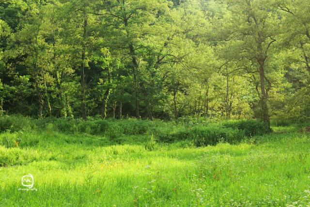 nalblog.com nalブログ。写真と旅と言葉たち  島根県飯南町赤名湿原 7月の風景 みどり  しろ  きいろ  林の中  水の世界 島根県飯石郡にある飯南(いいなん)町は2005年、頓原町と赤来町が合併してできた町です。その旧赤来町の下赤名というところに赤名湿原はあります。この湿原は環境省が選定した「日本の重要湿地500」にも選ばれているそうです。(環境省ホームページ)規模はそれほど大きくはありませんが、ここには寒冷地や湿地帯特有の様々な植物や生物が生息しています。4月にはミツガシワという花が、6月中旬から7月上旬にかけては「幻のトンボ」といわれるハッチョウトンボが見られるそうです。(島根県ホームページ)  初めてこの赤名湿原に来たのは2013年4月14日のことでした。それから3ヶ月後、湿地性植物が見頃になったというので再び訪れることにしました。初夏の日差しも湿地の森に入ると和らいで空気もひんやりとしたのを感じました。4月の力強くも殺風景な長尾池とは対照的にの水面には様々な植物が顔を出していて、葉っぱのなかったあの大きな木にはモッサリと葉っぱが茂り、池のほとりのウッドデッキが隠れる程でした。特に印象的だったのは、柔らかい緑色をしたハンノキ林とその周辺の草花の色です。遊歩道を歩いてしばらくは太陽が隠れていて気付きませんでしたが、日が照ったとたんに太陽の光をすーぅっと吸い込んだように柔らかく輝いてコチラの目を惹き付けてくれました。湿原を抜けると初夏の鮮やかな若々しい緑の稲と青空が広がっていました。また訪れたい場所の一つです。赤名湿原4月の様子は「島根飯南町赤名湿原 4月の風景」をご覧ください。「7月の色と光」  写真:©2013 Yuko Yamada. All Rights Reserved. 撮影地:島根県飯石郡飯南町下赤名 赤名湿原(赤名湿地性植物群落) 使用カメラ:デジタル一眼レフカメラ Canon EOS Kiss X4 使用レンズ:EF-S 18-55mm f/3.5-5.6IS 焦点距離:55mm 露出設定:1/125秒 f/8.0ISO 200 三脚使用:マンフロット三脚 参考資料 環境省ホームページ:生物多様性の観点から重要度の高い湿地 島根県ホームページ:赤名(あかな)湿地の湿地性植物(飯南町) 島根ジオサイト:赤名湿原(あかなしつげん) Wikipedia:赤来町、頓原町 当ブログに掲載されている画像等の無断転載はご遠慮ください。