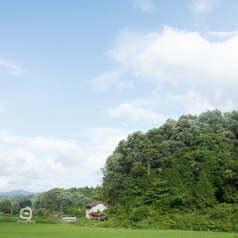 nalblog.com nalブログ。写真と旅と言葉たち  島根県飯南町赤名湿原 7月の風景 みどり  しろ  きいろ  林の中  水の世界 島根県飯石郡にある飯南(いいなん)町は2005年、頓原町と赤来町が合併してできた町です。その旧赤来町の下赤名というところに赤名湿原はあります。この湿原は環境省が選定した「日本の重要湿地500」にも選ばれているそうです。(環境省ホームページ)規模はそれほど大きくはありませんが、ここには寒冷地や湿地帯特有の様々な植物や生物が生息しています。4月にはミツガシワという花が、6月中旬から7月上旬にかけては「幻のトンボ」といわれるハッチョウトンボが見られるそうです。(島根県ホームページ)  初めてこの赤名湿原に来たのは2013年4月14日のことでした。それから3ヶ月後、湿地性植物が見頃になったというので再び訪れることにしました。初夏の日差しも湿地の森に入ると和らいで空気もひんやりとしたのを感じました。4月の力強くも殺風景な長尾池とは対照的にの水面には様々な植物が顔を出していて、葉っぱのなかったあの大きな木にはモッサリと葉っぱが茂り、池のほとりのウッドデッキが隠れる程でした。特に印象的だったのは、柔らかい緑色をしたハンノキ林とその周辺の草花の色です。遊歩道を歩いてしばらくは太陽が隠れていて気付きませんでしたが、日が照ったとたんに太陽の光をすーぅっと吸い込んだように柔らかく輝いてコチラの目を惹き付けてくれました。湿原を抜けると初夏の鮮やかな若々しい緑の稲と青空が広がっていました。また訪れたい場所の一つです。赤名湿原4月の様子は「島根飯南町赤名湿原 4月の風景」をご覧ください。「初夏の色」  写真:©2013 Yuko Yamada. All Rights Reserved. 撮影地:島根県飯石郡飯南町下赤名 使用カメラ:デジタル一眼レフカメラ Canon EOS Kiss X4 使用レンズ:EF-S 18-55mm f/3.5-5.6IS 焦点距離:20mm 露出設定:1/200秒 f/8.0ISO 200 三脚使用:なし 参考資料 環境省ホームページ:生物多様性の観点から重要度の高い湿地 島根県ホームページ:赤名(あかな)湿地の湿地性植物(飯南町) 島根ジオサイト:赤名湿原(あかなしつげん) Wikipedia:赤来町、頓原町 当ブログに掲載されている画像等の無断転載はご遠慮ください。