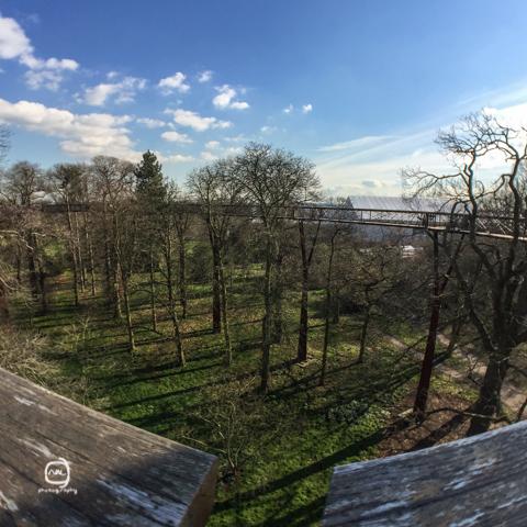 nalblog.com nalブログ。写真と旅と言葉たち 春の風景世界遺産英国キュー・ガーデンでまったり 早朝ディストリクト線リッチモンド行きのチューブに乗ってたどり着いたのはキュー・ガーデン駅。今日は王立植物園、世界遺産にもなっているキュー・ガーデンを散策します。朝食がまだだったので降車駅すぐ横のカフェでモーニングを。薄いトースト、目玉焼き、分厚いベーコンのシンプルな朝食。 ソイラテとあわせて£12ほどでした。  腹ごしらえを澄ませ、キュー・ガーデンに向かいます。駅からキュー・ガーデンの入り口までは徒歩5、6分です。入り口で入場料を払います。チケットはオンラインで買う方がお得だそうですが、この日は当日窓口で購入。募金が付いた方のチケットを購入しました。入って東へ向かっていくとおなじみのあの建物が見えてきます。こちら側からまわろうと思っていましたが、どうやら逆光っぽかったので西回りで歩いていくことに。 朝露光る芝生と木々、冬を越えて咲いたばかりの花々を眺めながら歩いていると、あの映画でおなじみの木を見つけました。樹齢何百年の木で根元を傷つけないよう細心の注意を払って撮影が行われたということが説明に書いてありました。晴れ空の下でも貫禄のある木です。奥の方へとしばらく歩いていると芝生の景色から森の景色へと変わってきました。散歩道はところどころで分かれていて途切れることがありません。延々と続きます。芝生の上や遊歩道の脇など、ところどころにベンチがあり休める様になっています。ベンチには名前とメッセージが刻まれたプレートが付いていて、故人との想い出や何かを記念しているのだろうと想像するとなんだか温かい気持ちになりました。こういう形で思い出を残せるって素敵だなと思います。柔らかい土の上を歩くのもとても気持ちよかったです。小道に入るとリスがご飯を食べていました。逆立ちで背伸びをして、器用な格好でえさをとる姿がかわいらしいですね。見晴らしのいい展望遊歩道もあります。高さは20〜30mほどでしょうか。上までは螺旋階段を使い所々に街の説明等があり大きく一周できるようになっています。階段も通路も足元は網状になっているので下が透けて見えます。スリル満点です。野鳥観察やちょっと違った視点から自然を眺めることができます。気付けば開園からたっぷり3時間は歩いていたのでお腹ペコペコです。 園内のカフェで軽くランチをとることにします。サラダのSサイズ£4.5、パスタキッズサイズ£4.95、ハーブティー£2.2  計£11.65のランチです。ハーブティーはカモミールにしました。サラダに使っている野菜やハーブは園で育てているものだそうです。 なんだか健康的、ウィンザーでもそうでしたが、王立の施設で食べる食べ物は味も値段もとてもヘルシーです。添加物の入っていない優しい味がします。晴れたり曇ったりとロンドンらしい忙しい天気でしたが、ちょうど太陽が出て来たので外のテラスでいただききました。吹いてくる風はまだまだ冷たかったものの、春の花が咲き始めている野原の中でほっと一息つくことができました。「キュー・ガーデン春の風景」  写真:©2016 Yuko Yamada. All Rights Reserved. 撮影地:英国ロンドン王立植物園キュー・ガーデン 使用カメラ:スマートホン iPhone6 背面カメラ 使用アプリ:Procamera キュー・ガーデン周辺地図 当ブログに掲載されている画像等の無断転載はご遠慮ください。