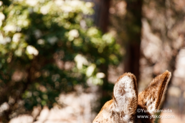 nalblog.com なんとかなる。なんとかする。写真と言葉 - 遥か彼方の記憶遥か彼方の記憶  弾けては消える感情の泡  柔らかな心を言葉が包み込む  素直な言葉で包んだ気持ち  緩やかに上昇し  弾けて広がるあの木の下で ©2017 Yuko Yamada. All Rights Reserved. 写真・文章・コンテンツの無断転載・転用は固くお断り致します。