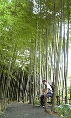 鎌倉竹やぶ