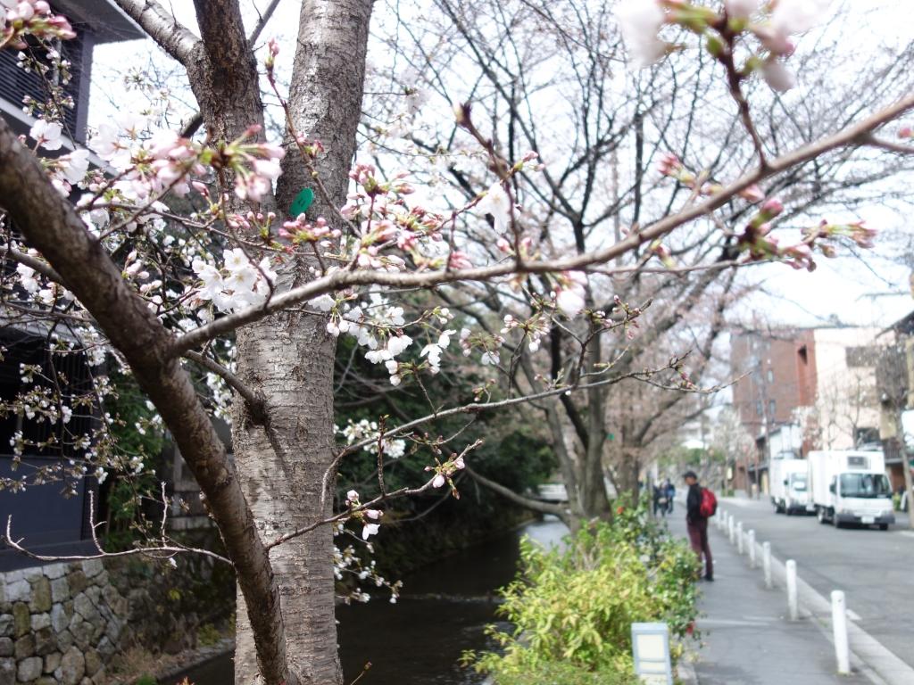 『京都のハギレ』