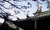 神田明神 湯島聖堂 (2).JPG