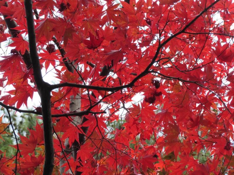 新潟県の紅葉狩り人気スポットめぐり
