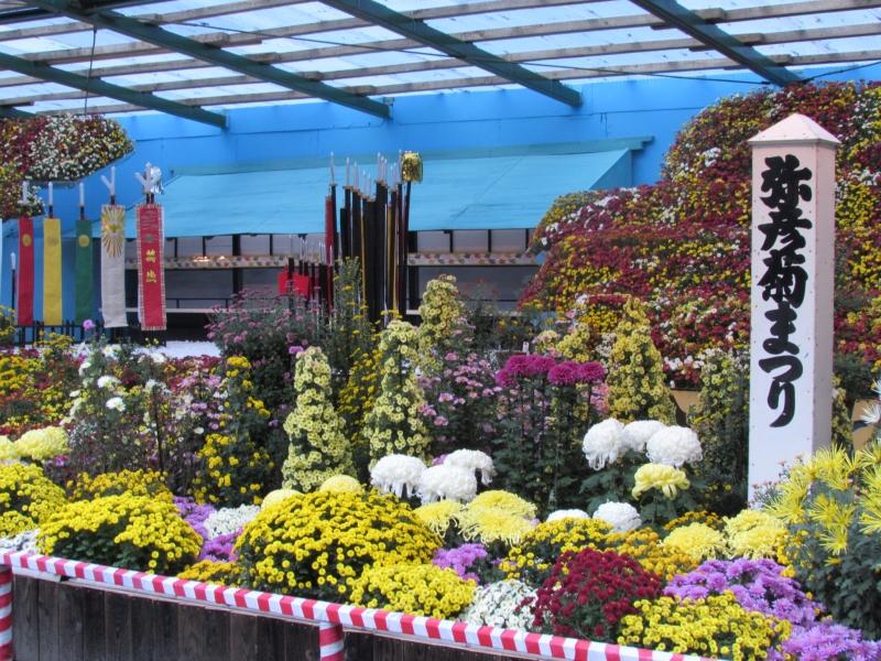 弥彦神社(彌彦神社)の奉納菊花展