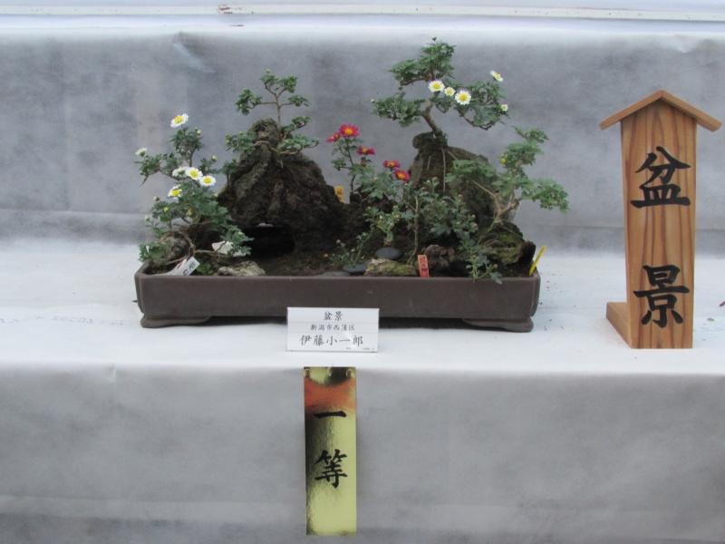 一等の盆景(盆栽)新潟県新潟市西蒲区の伊藤小一郎氏