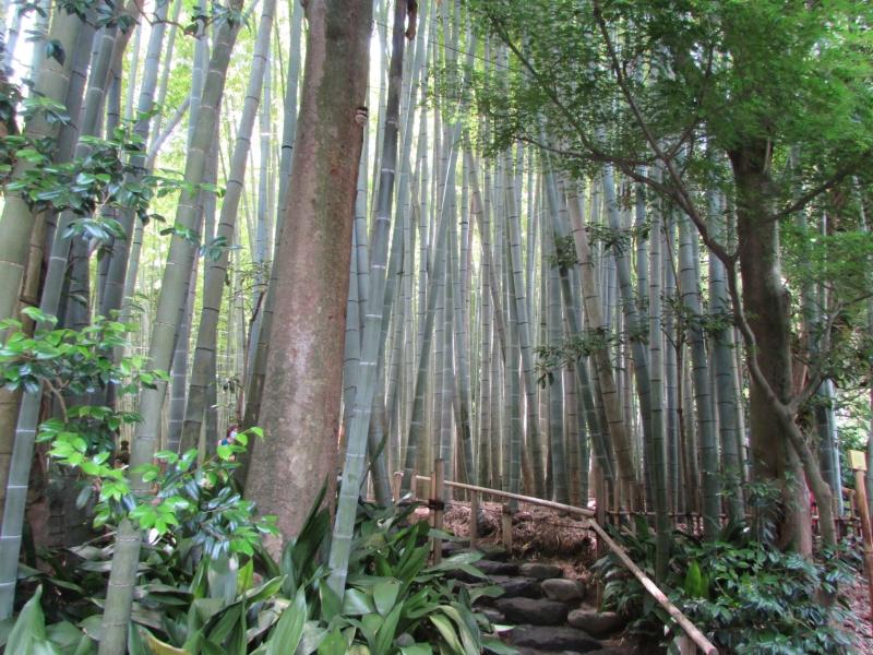 報国寺の竹の庭(HOUKOKUJI TEMPLE TAKENONIWA