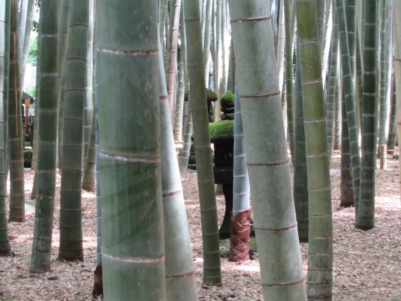 報国寺「竹の庭」神奈川県鎌倉市