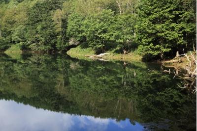 夏の御池の様子