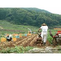 収穫風景です。
