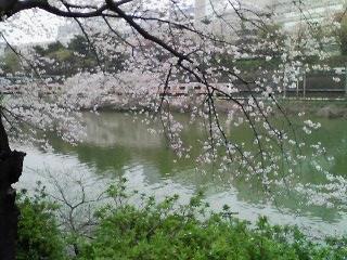 10-0407_桜04.jpg