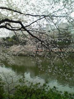 10-0407_桜03.jpg