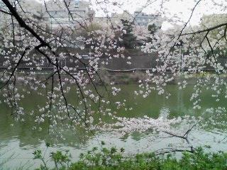 10-0407_桜02.jpg