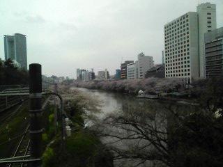 10-0407_桜01.jpg