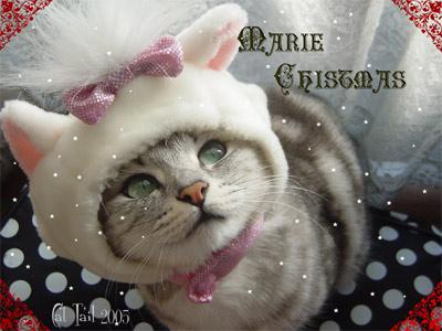 ミルキークリスマスカード