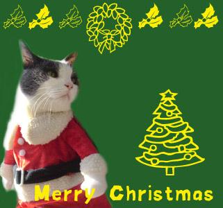 まりもさんクリスマスカード