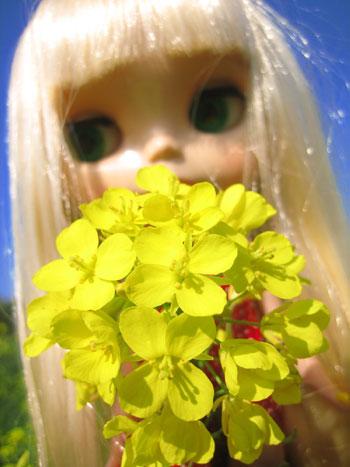 マルちゃんと菜の花