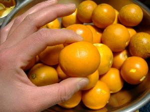 ハムリンオレンジ