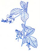 萩の会ロゴ