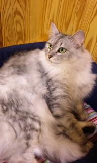 猫カフェ0001.jpg